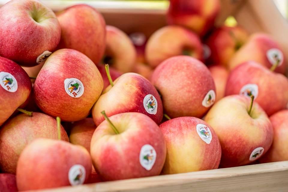 őszi almafogyasztást ösztönző kampány, alma