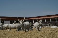 Montág-pusztai Állattartótelep komplex fejlesztésé