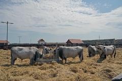 Montág-pusztai Állattartótelep komplex fejlesztése, Körös-Maros Nemzeti Park