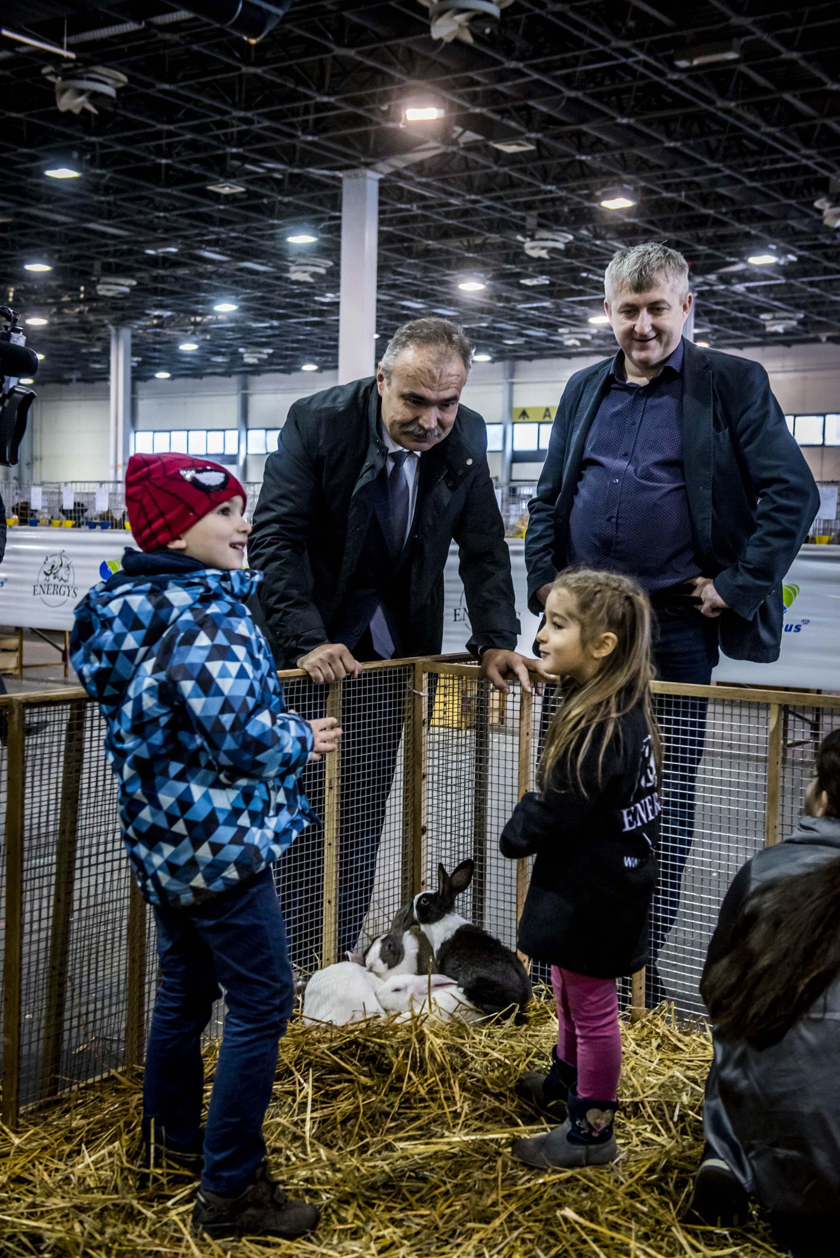 Nemzeti-galamb-baromfi-nyúl-és-díszmadár-kiállítás-Hungexpo-2019-15