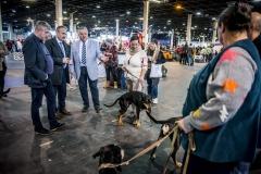 Nemzeti-galamb-baromfi-nyúl-és-díszmadár-kiállítás-Hungexpo-2019-24