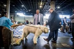 Nemzeti-galamb-baromfi-nyúl-és-díszmadár-kiállítás-Hungexpo-2019-27