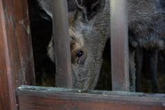 szarvasi-Körösvölgyi-Látogatóközpont-és-Állatpark-Nagy-István-miniszter-10